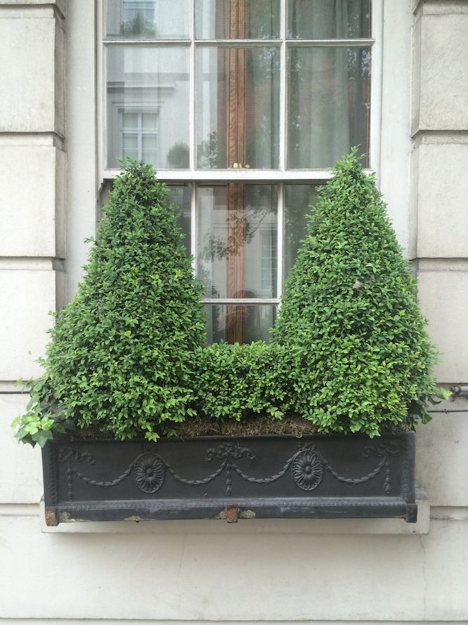 31 of the Best Window Boxes in London Photos | Architectural Digest [In an Adam-style metal window container, boxwood cones are linked by a smaller cube of the same variety.]