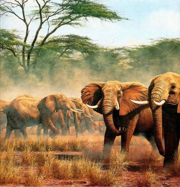 🎨 Simon Combes - англиский художник-анималист (1940-2004) Его жизнь богата приключениями по миру дикой природы, но самые первые начались рано, когда в 1946 году, его родители переехали в Кению, волшебное место для мальчика. С 1974 года он начал свою жизнь как профессиональный художник. Наиболее известны его потрясающие изображения дикой природы в африканских African bush. Работы Simona Combes известны во всем мире и получили множество престижных наград.