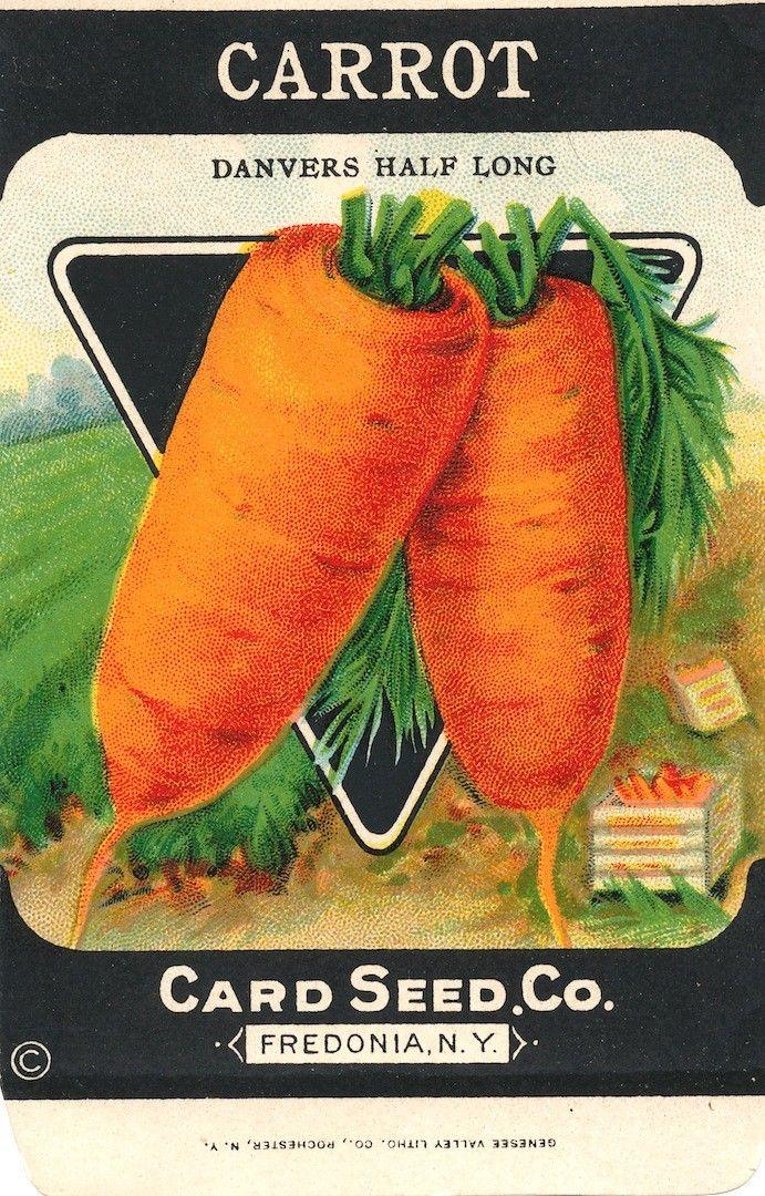 vintage seed packets printable   vintage Carrot (Danvers Half Long) seed packet from the Card Seed ...