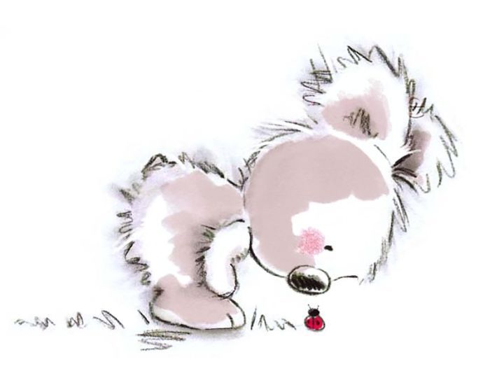163 best Koala illustrations images on Pinterest | Koala ...