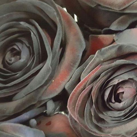 Black rose nooit eerder gezien zo zwart voor de liefhebber... #oktoberinhuis #keizersgracht #eindhoven #hollande #nederland #bloemenwinkel #bloemist #flowerphotography #flower_daily #roses #rozen #love #liefde #valentine #valentijn #instaflowers #flowerstagram #flowershop
