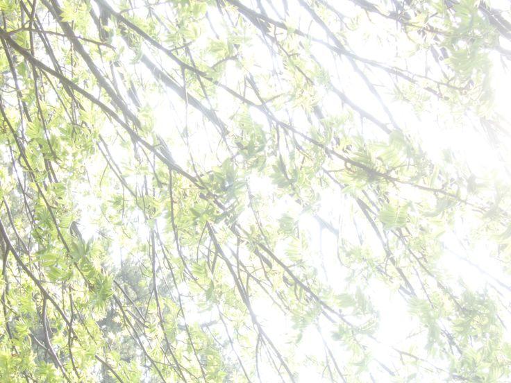 At the Ashino park(Aomori,Kanagi town) with Nikon P330