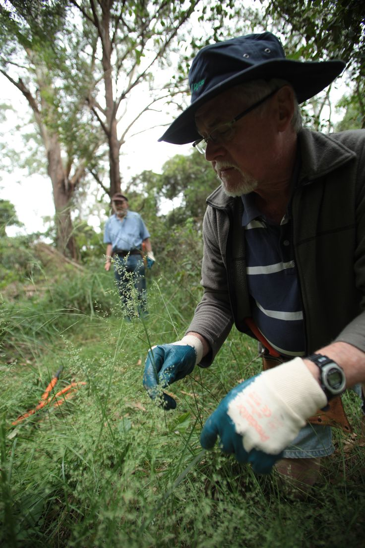 Darvall Park - Chatham Road, Denistone, NSW. Bushcare volunteers meet the 1st Sunday of each month from 1.30pm - 3.30pm. All welcome. #Ryde #Denistone #WestRyde #Park #Bushcare #Environment #Sustainability #Bush #Flora #Volunteer #CityofRyde #RydeLocal