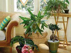 Où installer ses plantes dépolluantes dans la maison, pièce par pièce