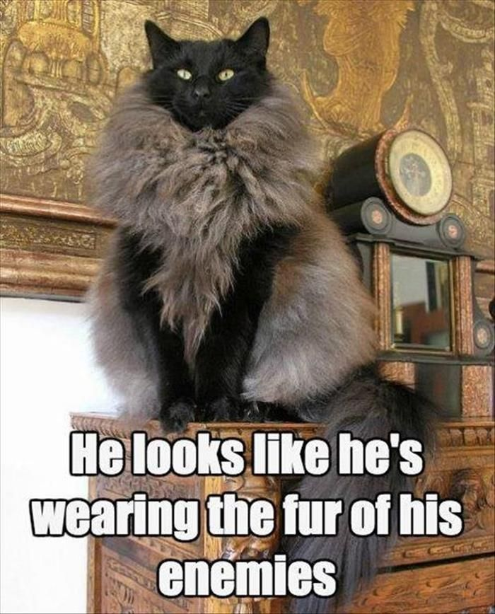 FUNNY ANIMAL PICTURES OF THE DAY – 17 PICS — BEST FROM NATALI ASTAR