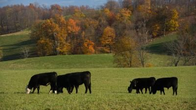 Grazing conference offers cutting-edge information | UK College of Agriculture News