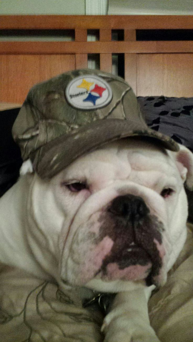 The new Steeler mascot lookout Ravens he will bust a BOOM on you dirty birds