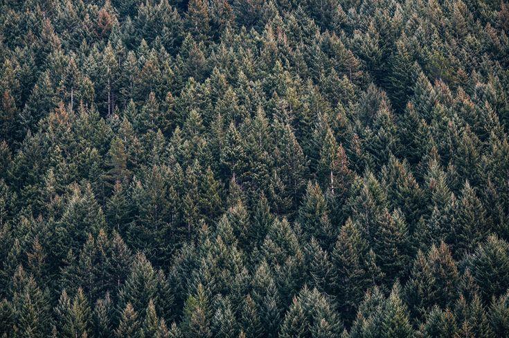 Nature patterns
