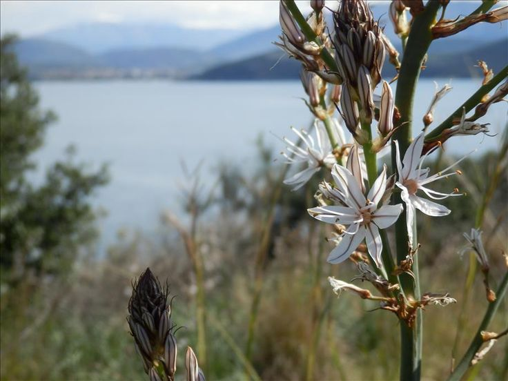 52 best places to visit in corfu images on pinterest for Cool places to visit on the east coast
