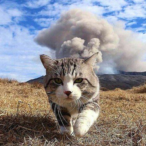 "12.4 mil curtidas, 72 comentários - Cat Cute Cats (@cat_cute_cats) no Instagram: ""✨ Follow @cat_cute_cats ✨ Photo: @noraneko_nyankichi . . . #animals #catsofworld #gato…"""