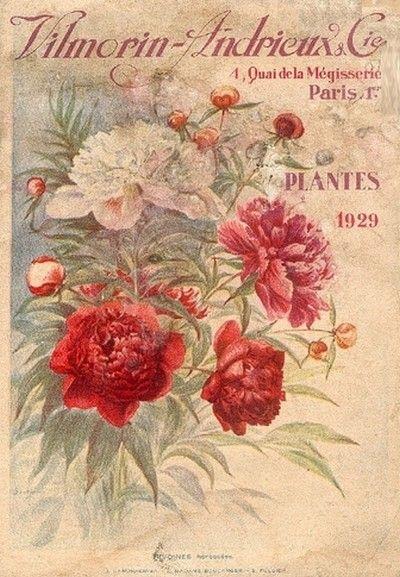 Catálogo Vilmorin-Andrieux, 1929.