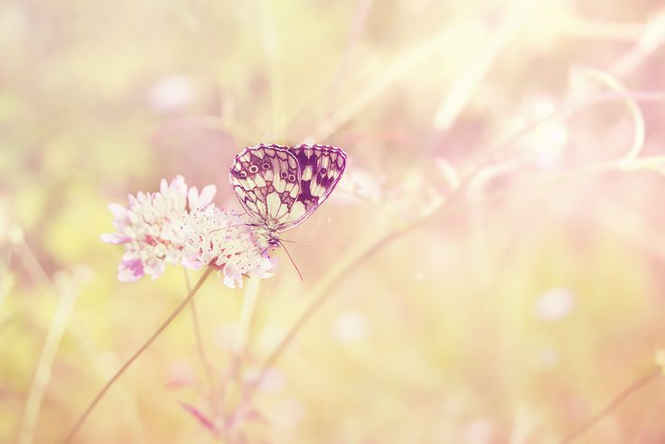 """Успешен и много усмихнат слънчев понеделник на всички :) """"Да живееш означава да създаваш неща, а не да ги придобиваш."""" Аристотел"""