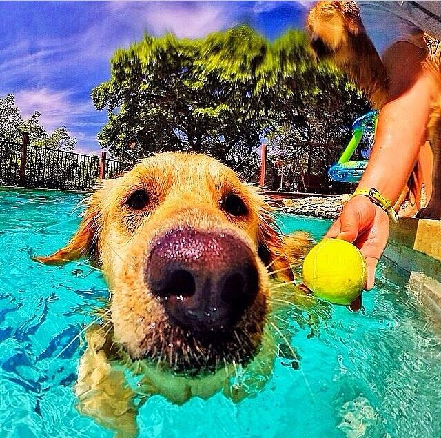 Capture your best moments with your best furry friends! #dog #pool https://www.outdoorphoto.co.za/gopro-standard-housing-hero3-and-3plus?search=gopro&page=2