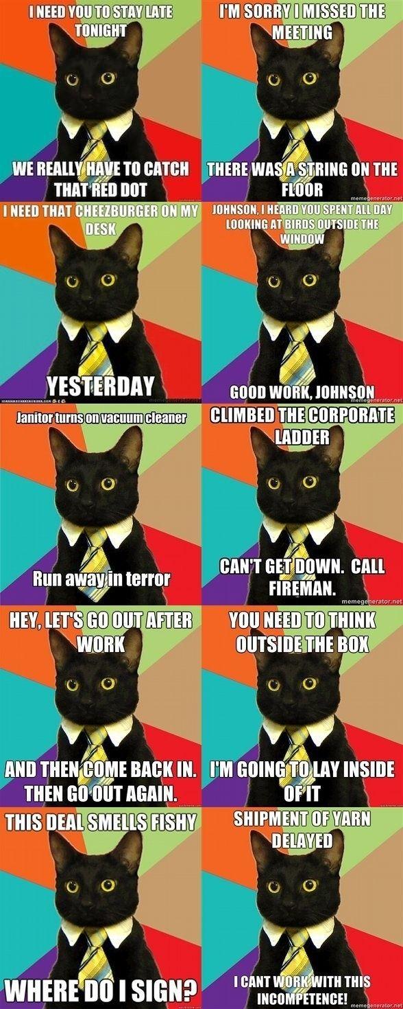 aeb1c119def5c03abd58e4a29b1b6708 business cat meme office cat 59 best business cat images on pinterest business cat meme,Get Down Cat Meme