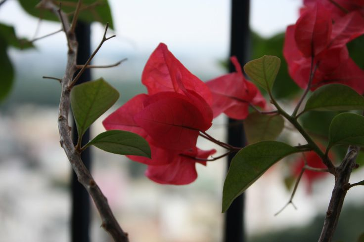 Balcony colours