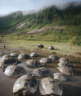 World's Greatest Dream Trips: Galápagos, Ecuador | Travel + Leisure - September 2013