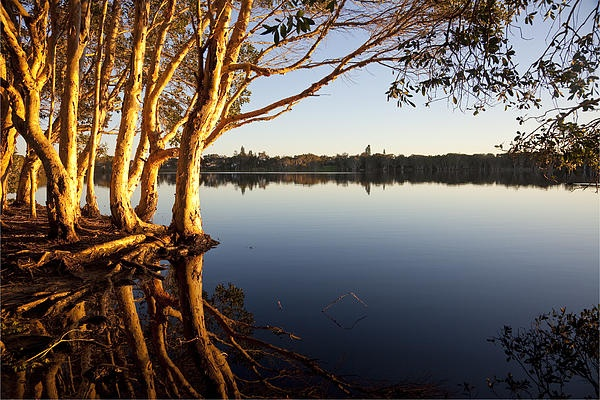 Lake Ainsworth, tea tree lake perfect for the family
