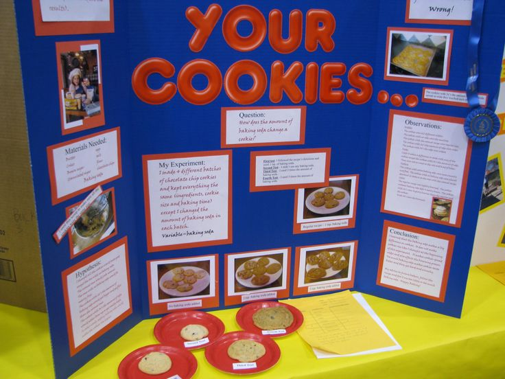 Best 25+ Fair projects ideas on Pinterest School science - science project report