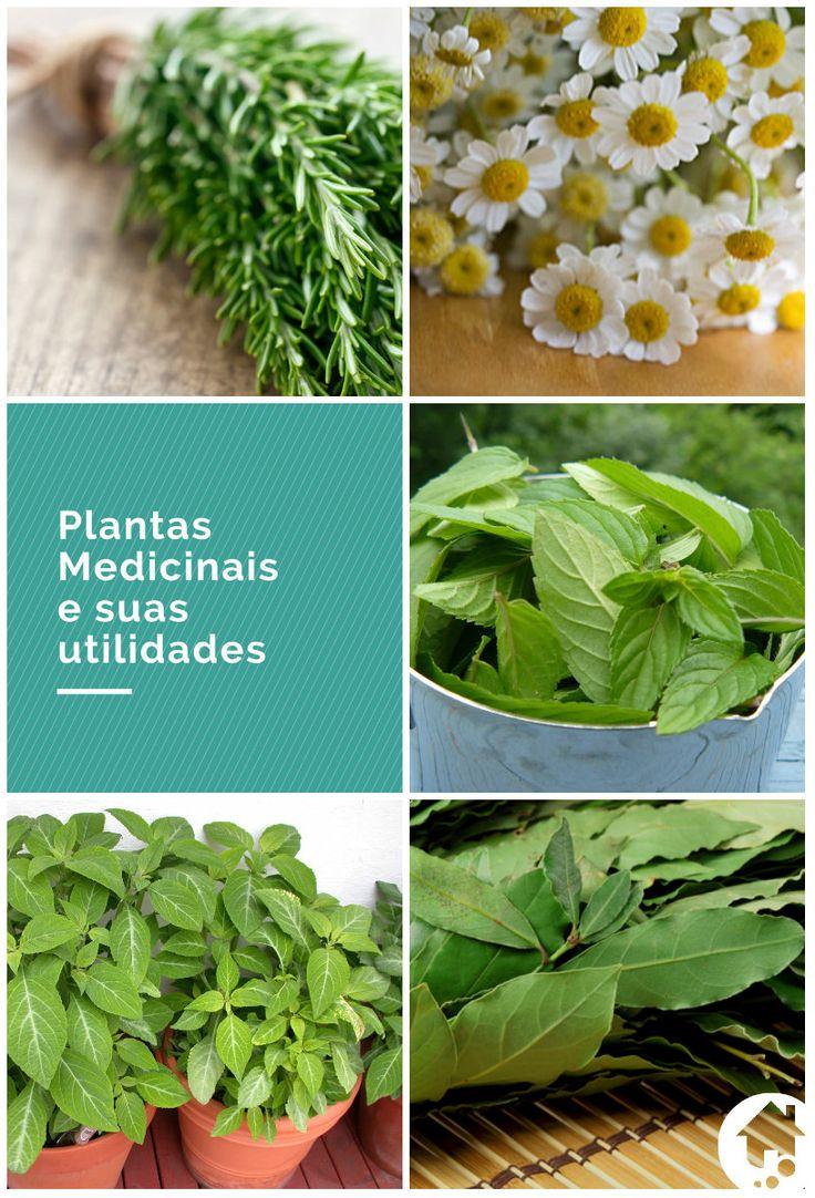 Além de garantir hortaliças e temperos sempre fresquinhos à mesa, ter uma horta em casa também pode fornecer plantas medicinais. Clique e conheça algumas das espécies para cultivar em casa. #jardim #horta #plantasmedicinais