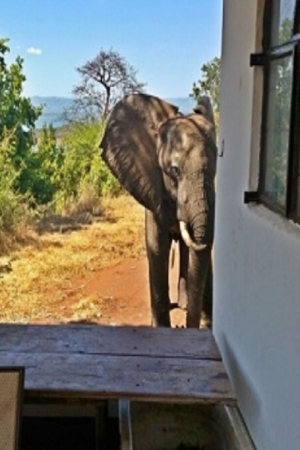 Wild Bull Elephant Was Standing Right Outside Their House Then