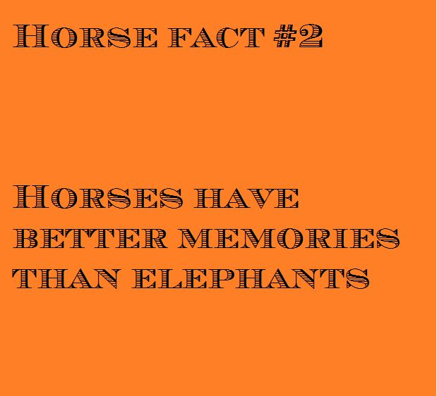 25+ best ideas about Horse facts on Pinterest | Horse names, Horse ...