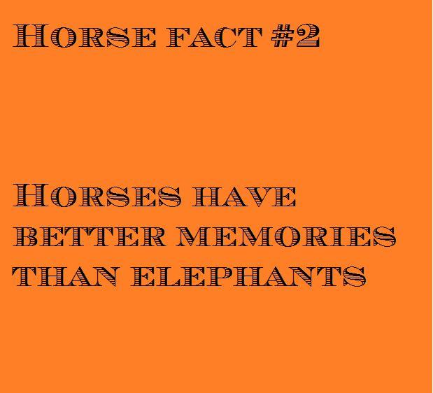 #Fun #horse #fact no 2