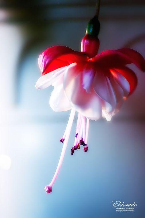 Krása, jemnost, křehkost ... / Beauty, delicacy, fragility ... …