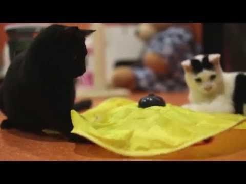 Cat Toy Video