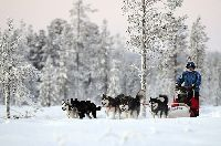 Volunteer on a husky farm in Finnish Lapland, 300km inside the Arctic Circle - workaway.info