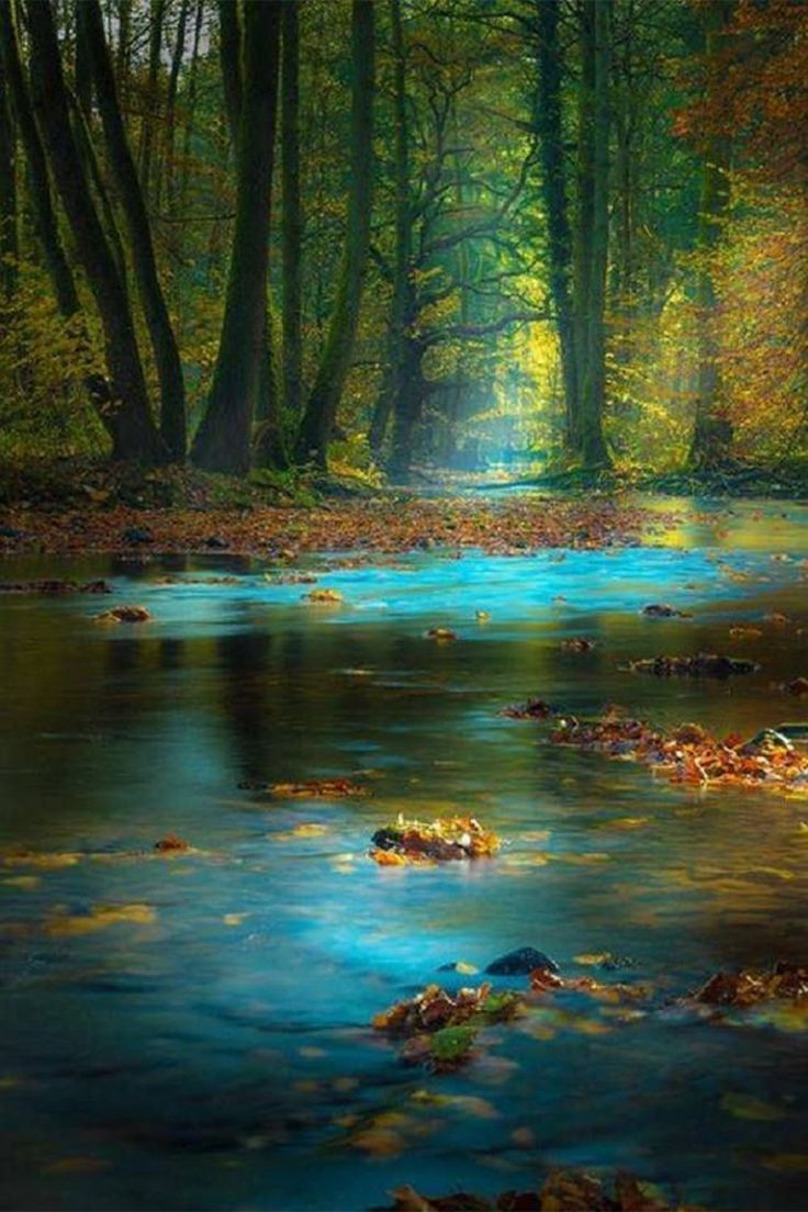Magic Light in the Spessart, Germany by Rolf Nachbar