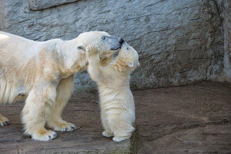 Dándole un beso a mamá