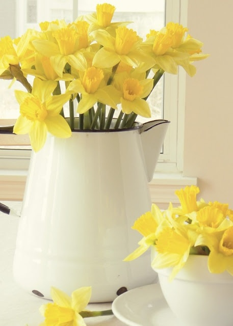 Daffodils in a pitcher, simple but elegant.