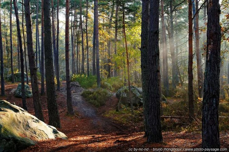Sunrays and fog in the forest -3 - This is autumn in trois Pignons woods (Fontainebleau forest), France