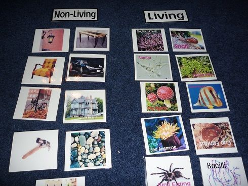 living vs nonliving...great ticket out the door activity to then be used as a classroom artifact!