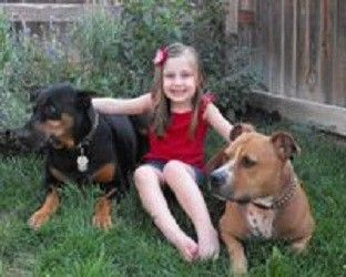 dog to be destroyed for barking!! What??: Finals, People Signs, Pitbull, Hurts Anyon, Colorado Dogs, Families Dogs, Poor Dogs, Dobermans, Bad Dogs