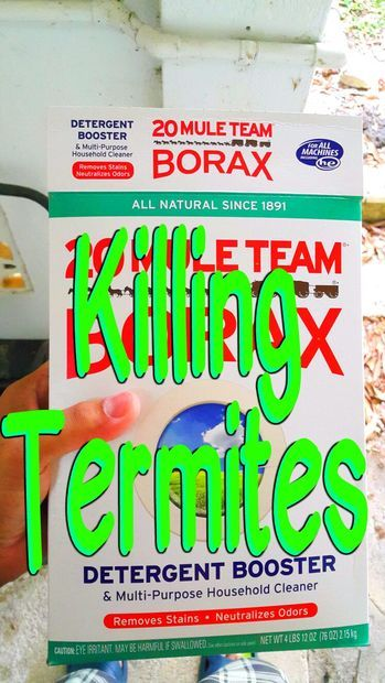 how to kill termites at home