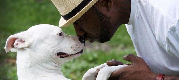 Pitbull Training – House Training Puppies      http://www.housetrainingpuppiesblog.com/house-training-puppies/pitbull-training-house-training-puppies/