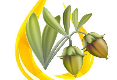 Olio di jojoba, uno dei migliori oli per la cura della pelle