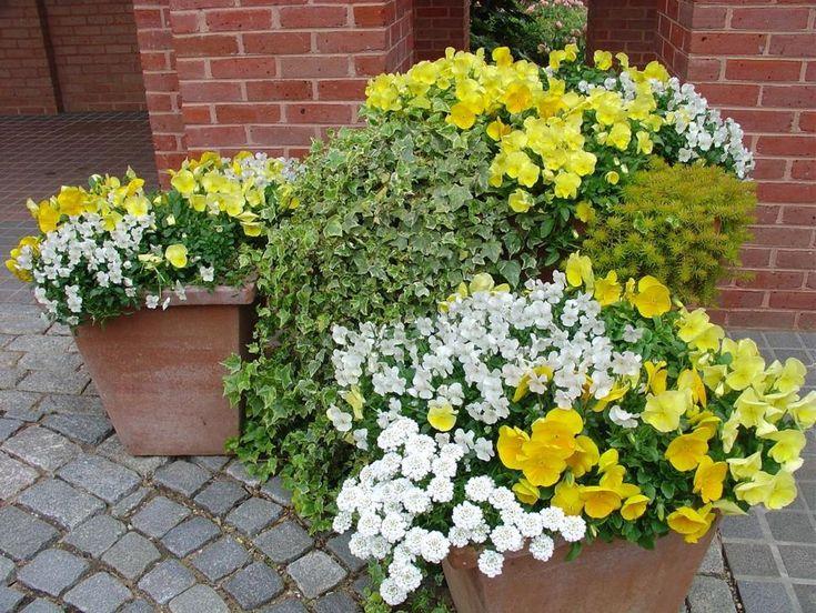 Container Garden Ideas – Landscape ideas