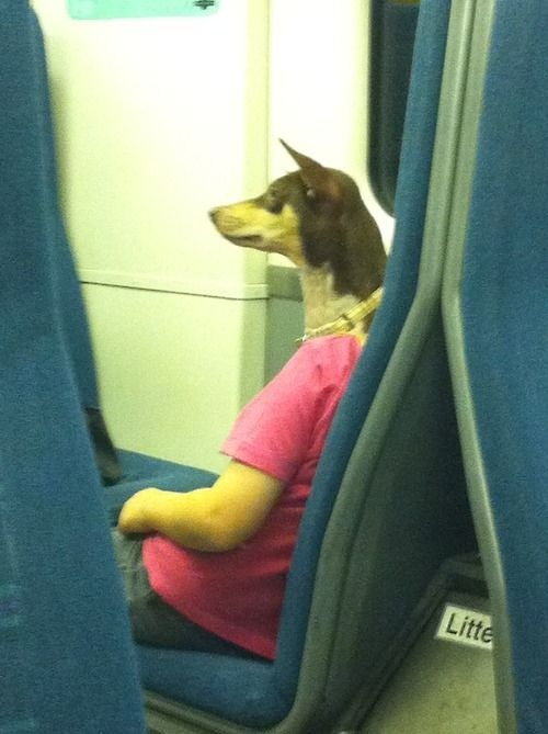 (This is not a dog politely riding the train to work.) | 25 Photos You Need To Really Look At To Understand