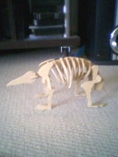 Another miniature wooden skeleton I made from scratch.  This one is of a megalibwalia, a sheep sized echidna that lived about 50,000-80,000 years ago.