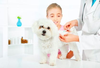 5 Ways to Save on Pet Vaccinations