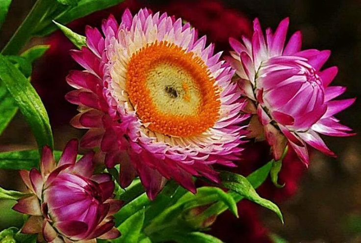 132 best les plus belles fleurs du monde images on pinterest beautiful flowers world and flowers. Black Bedroom Furniture Sets. Home Design Ideas