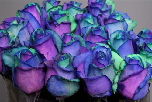 Purple, teal and blue roses