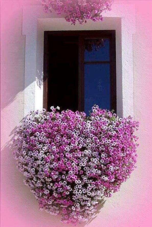 Flowered window #Flower, #Heart, #Window: