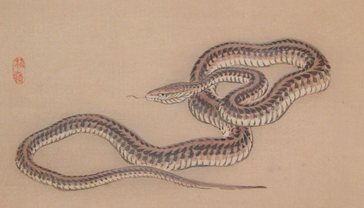 Snake - woodblock print - Kōno Bairei (1844-1895) Japan