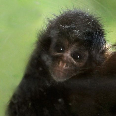 "The UK's Chessington Zoo reports a record year for baby births. Marc Boardman, Zoo Manager, explained: ""2009 has been our biggest baby boom EVER at Chessington World of Adventures, with everything from gorillas, spider monkeys and lemurs to frogs, seahorses and condors getting in on the action. Most of the animals in Chessington Zoo are endangered or threatened species and the most important part of the work of the zoo is its contribution to conservation."""