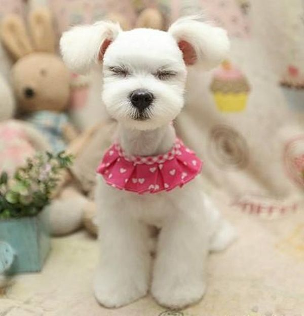 30 Different Dog Grooming Styles More