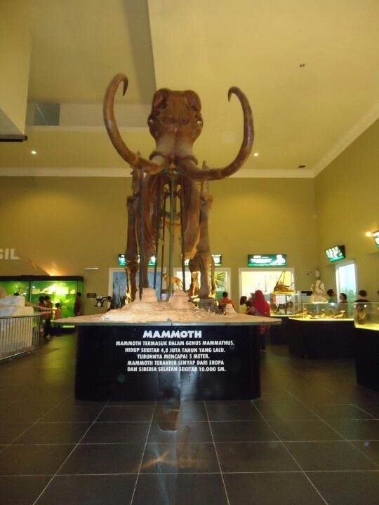 Mammoth at Animal museum of Batu , Malang, East Java, Indonesia