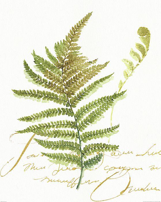 Botanical Painting - My Greenhouse Fern II by Lisa Audit
